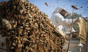 הכוורנים הפלסטינים של עזה • גלריה שכולה דבש