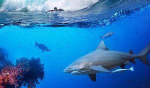 באמצע תחרות: כריש תקף אלוף עולם בגלישה