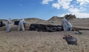 אסון אקולוגי מהחמורים ביותר שהיו בישראל