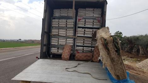 נתפסו כ-60 אלף ביצים מזויפות מהשטחים