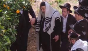 הרב אברהם יצחק קוק