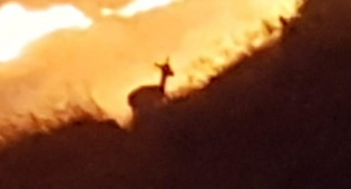 מעורר רחמים: צביה מנסה להימלט מלהבות