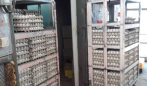 כ-3,000 ביצים שנחשפו להדברה הושמדו