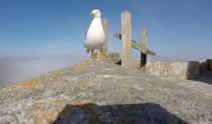 ממעוף הציפור, באמת: שחף חטף מצלמת GoPro