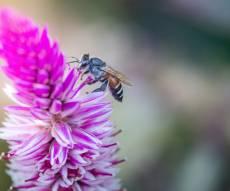 מחקר: לדבורים יש העדפה בין ימין לשמאל