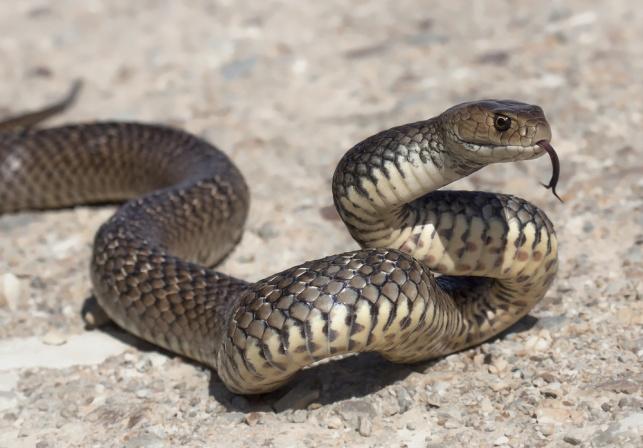 עונת הנחשים התחילה: עלייה חדה בהכשות