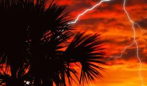 כמו לבה: מה קורה לעץ שחוטף מכת ברק?