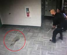 השוטרים רדפו בתחנה אחרי... דביבון • צפו