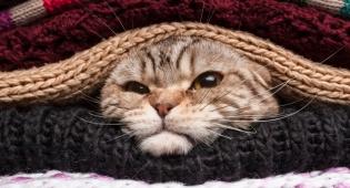 חתול בשק - חתול בשק: השקרים של הפירסומאים