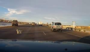 הכלבלב המבוהל על הכביש המהיר