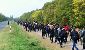 פליטים מוסלמים - 6.5 מיליון מוסלמים עומדים להגיע לאירופה
