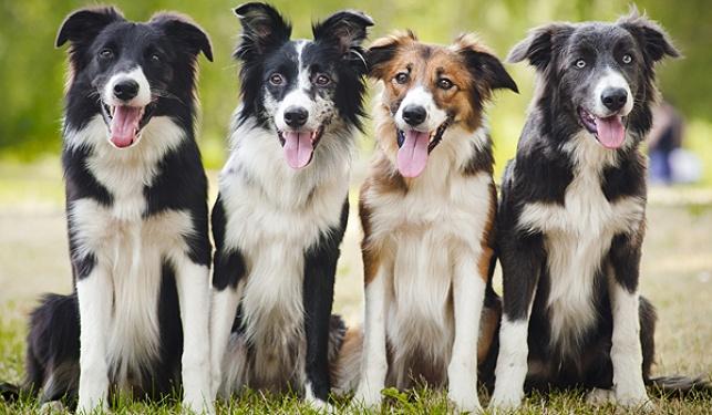 צפו: הכלבים הכי מוזיקליים שראיתם