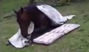 בפארק: סוס התכרבל בשמיכה