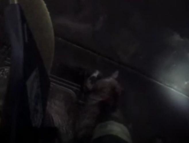 תיעוד מקסדת הכבאי: חילוץ החתול מהאש