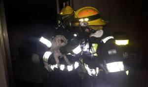 לוחמי האש חילצו את הכלב מבין הלהבות