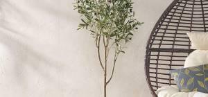 הצעקה האחרונה: עץ זית בתוך הבית
