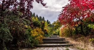 התובעת מצאה את הגן מושחת והרוס. אילוסטרציה - השכן כרת את העצים והרס את הגן בפרץ של כעס