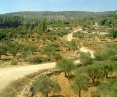הרי יהודה בדרך מירושלים לבית שמש - התחזית: ירידה בטמפרטורות, בשבת נאה