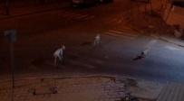 כלבים משוטטים באופקים - כתב אישום הוגש נגד בעל הכלבים באופקים