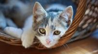 חתול, אילוסטרציה - יפן: אשה מתה לאחר שנדבקה מקרציית חתול