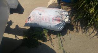 גנבו 120 קילו דגים ממעגן מיכאל ונתפסו