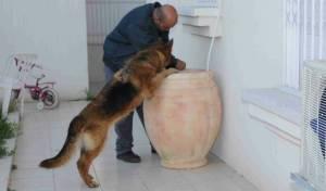 שוטרים מבצעים חיפושים באחד מיעדי החקירה