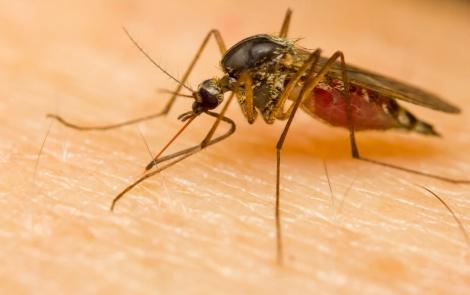 יתושים אורבים לעקיצה גם בחורף. אילוסטרציה - איך לשמור על הילדים מעקיצות? עשה ואל תעשה