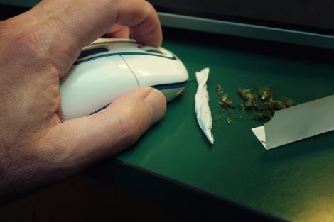 """ארגנטינה: """"עכברים אכלו חצי טון מריחואנה"""""""
