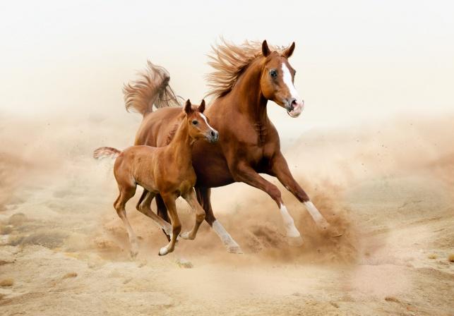 """""""...אלה בסוסים ואנחנו בשם ה'"""""""
