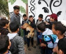 תיעוד: ילדי עזה השתעשעו עם גורי האריות