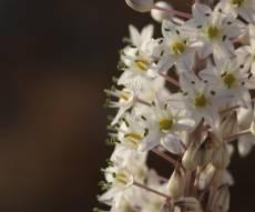 הצמח המרשים שגדל כעת ומוסר ההשכל