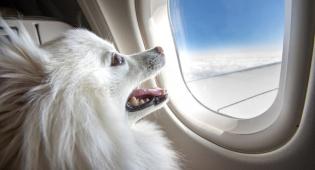 """ארה""""ב בדרך להגביל העלאת חיות מחמד לטיסות"""