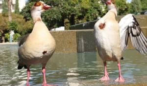 תיעוד חורפי: פארק מרום נווה ברמת גן • צפו