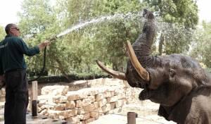 כך החיות בספארי התקררו בחום הכבד. תיעוד