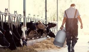 """הסערה בארה""""ב: דיון הלכתי בדין חלב עכו""""ם"""