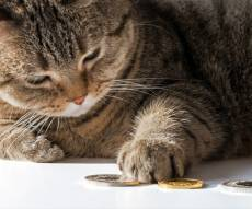 החתולים שזכו בירושה של 300 אלף דולר