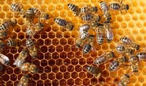 בית שמש: ילד חרדי נעקץ מדבורים