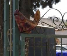 ראש חזיר בפתח בית הכנסת ברמת השרון