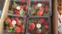 המשטרה החרימה עשרות ארגזים עם תותים