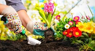 חוץ מחצר יפהפיה: 5 יתרונות שיש לגינון