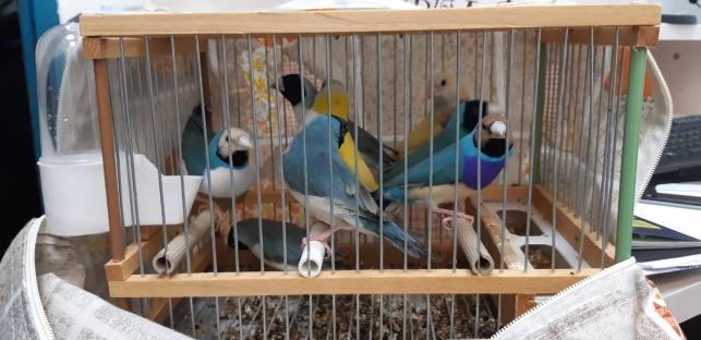 הציפורים שנתפסו