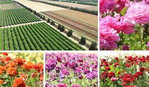 הרחפן תיעד: הפריחה בעוטף עזה - מהאוויר
