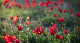 סיור צבעוני לשמורת הפרחים המרהיבה • צפו