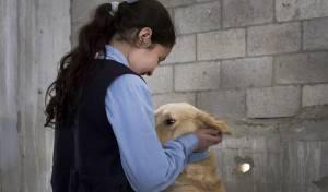 תמונת אילוסטרציה - הנתונים: כמה כלבים חיים בקריית ספר החרדית?