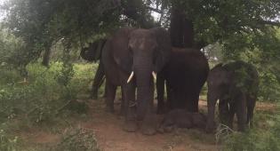 פילים וצבועים: דרום אפריקה דרך המצלמה