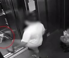 ההתעללות בכלב הקטן - השכן החדש בעט את הכלב אל תוך המעלית