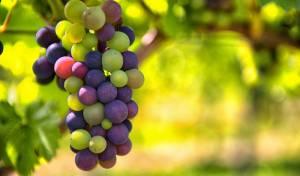 """יצרניות יין רבו: למי שייך המותג """"יקבי ירושלים""""? אילוסטרציה"""