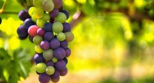 """יצרניות יין רבו: למי שייך המותג """"יקבי ירושלים""""? אילוסטרציה - יצרניות יין רבו: למי שייך המותג """"יקבי ירושלים""""?"""