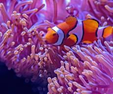 אקווריום דגים: לא רק יפה, גם משחרר מתחים