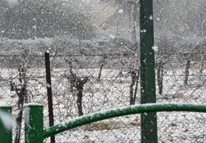 צפו בפתיתי השלג הרכים, שירדו בגוש עציון